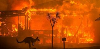 Economic impact of Australia Bushfires set to exceed $4.4 Billion
